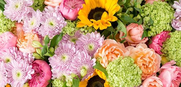 15% تخفیف اولین خرید گیاهان گل ستان